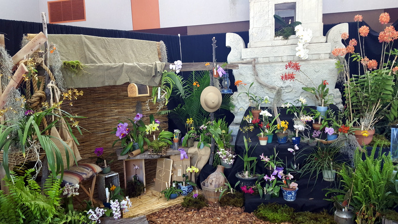 the-display nm orchid guild